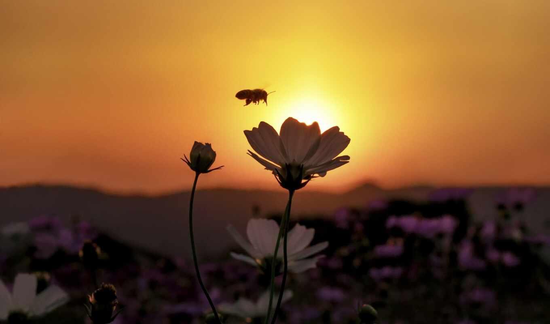 Цветы на рассвете картинки