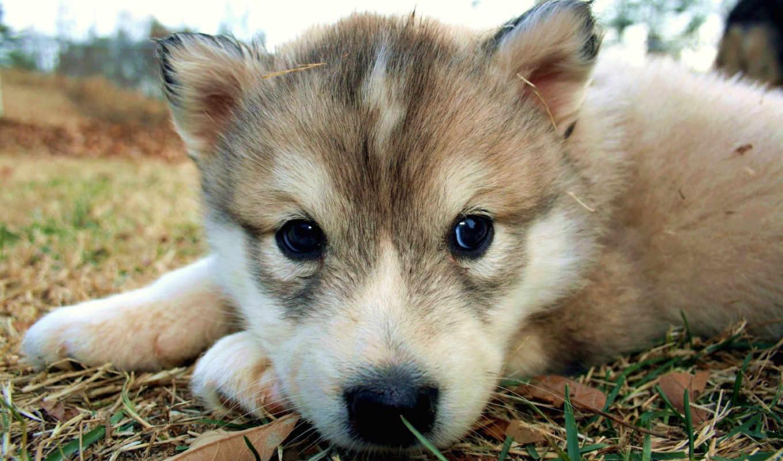 обои, щенок, собака, цветы, собачка, щенки, малыш,