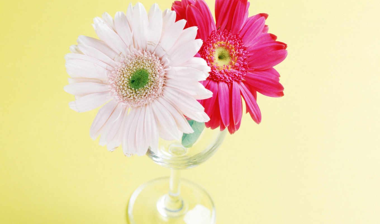цветы, большая, живопись, природа, подборка, life,