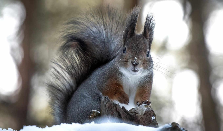 зими, як, готуються, білка, звірі, media, проводять, цікаво, готується, білки,