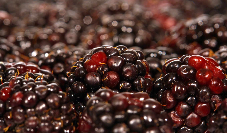 ежевика, food, fruit, показывать, фрукты, эротику,