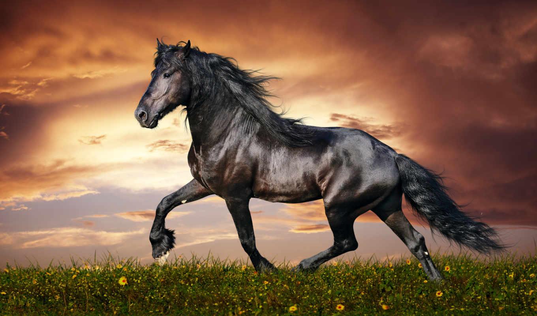 животные, лошади, лошадь, run, лошадей, красивые, full, широкоформатные, freedom, графика,