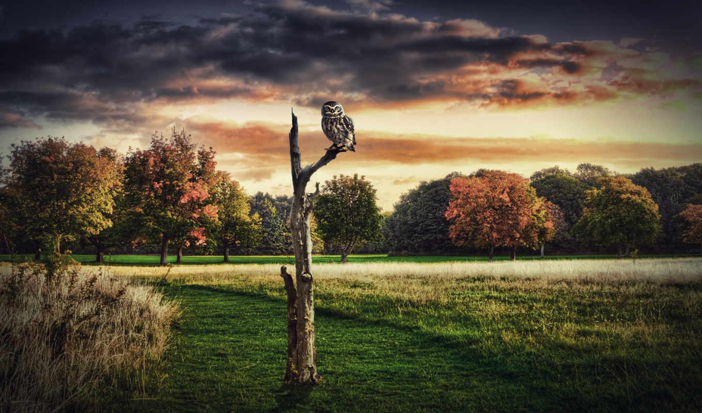 сова, взгляд, птица, хищник, трава, дерево,