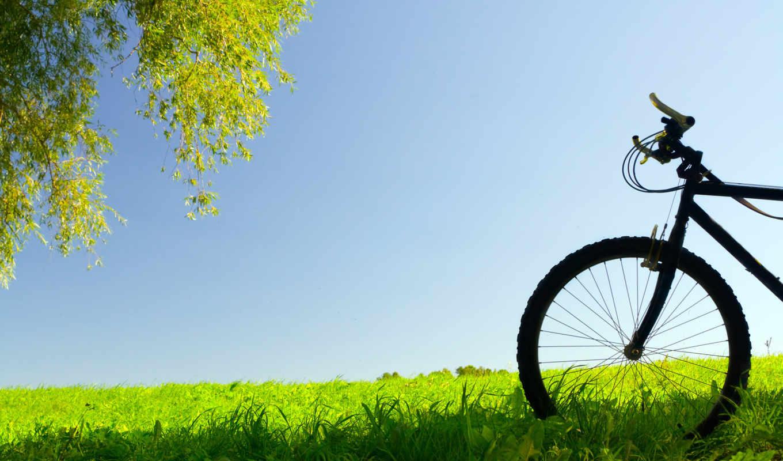 трава, природа, trees, настроение, листва, настроения, велосипеды, дерево,