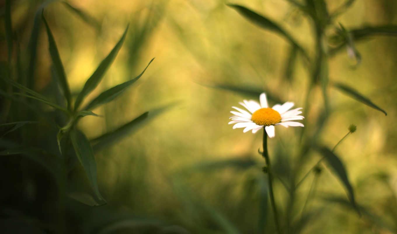 ၾက, цветы, quality, качественные, предпросмотром,