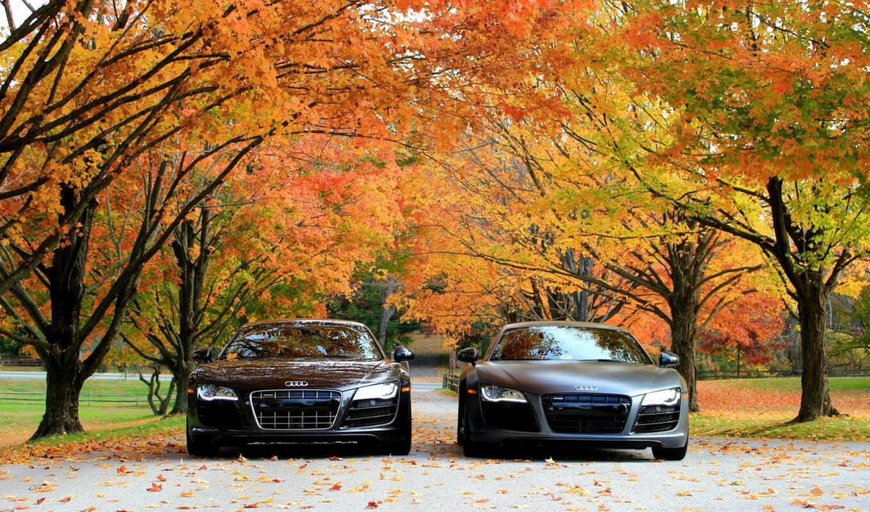 ауди, осень, машины, авто, деревья,