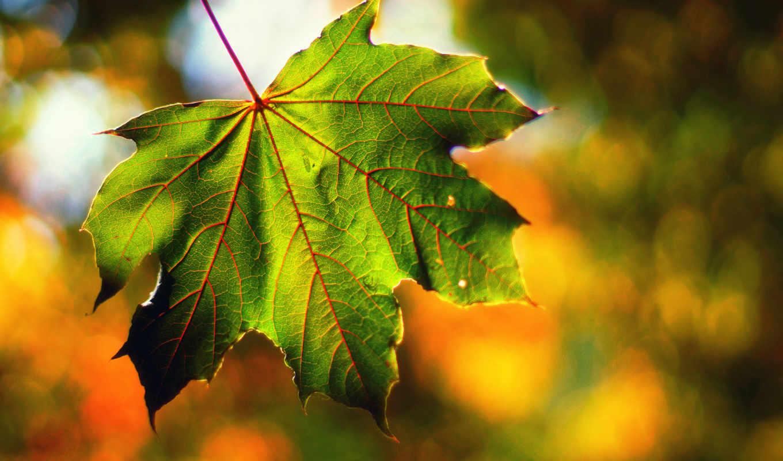 сентябрь, osen, makro, листь, svet, боке,