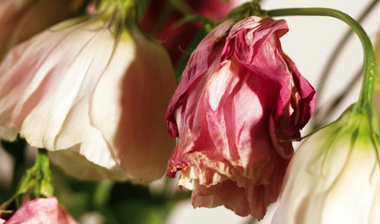 flowers, september,