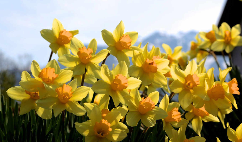 много, цветы, pack, mixed, желтые, best,