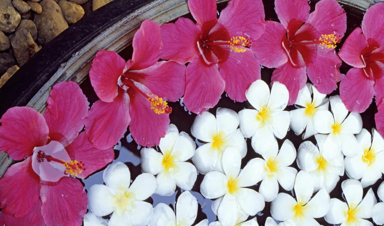 цветы, blabla,