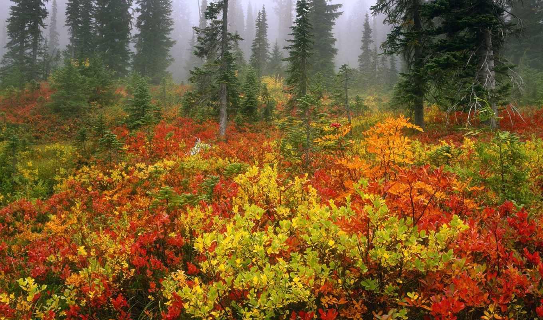 лес, осень, mist, edge, свой, совершенно, foggy,