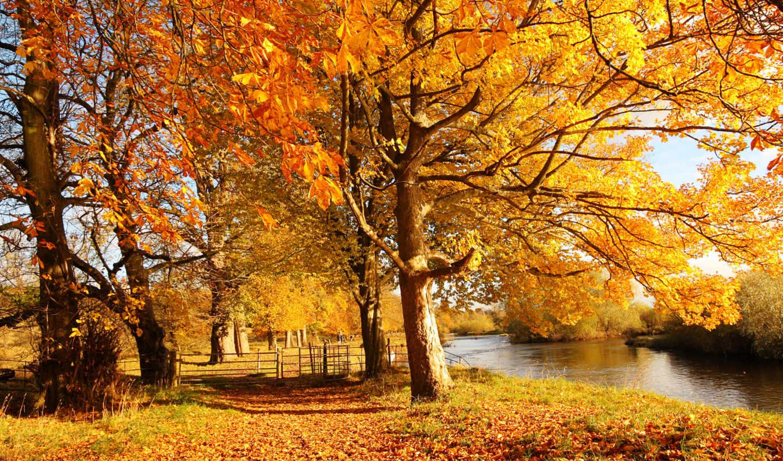 осень, деревя, природа, лес, картинка, листья,