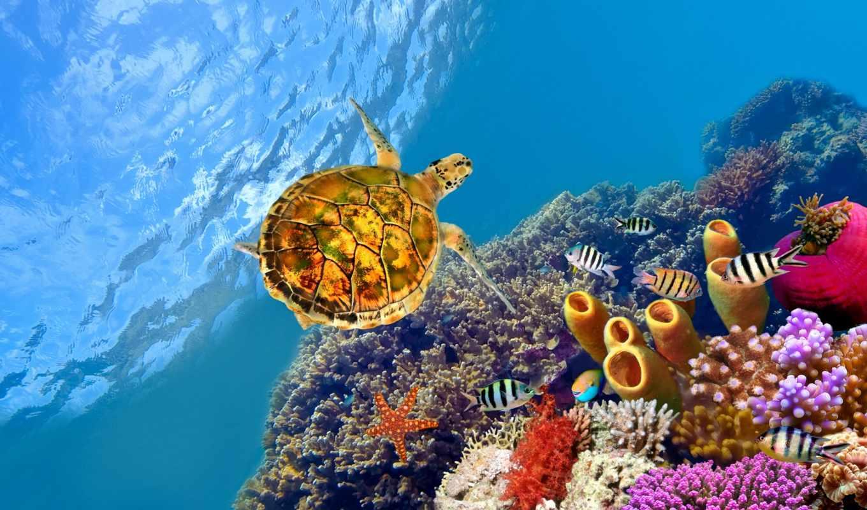 эль, очарование, sheikh, туры, грн, фотообои, египетский, есть, отели, кораллы, шейха,
