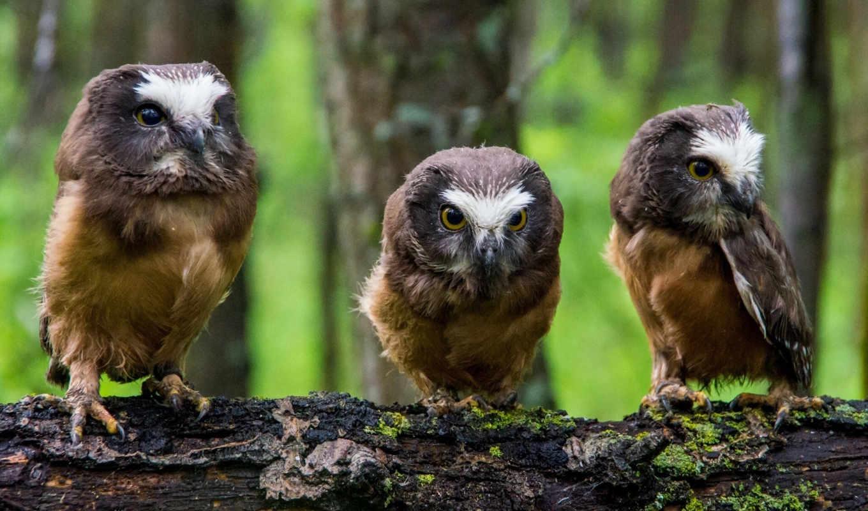 животными, фона, веселые, разных, фотографии, животных, интересные, изображением, совы,
