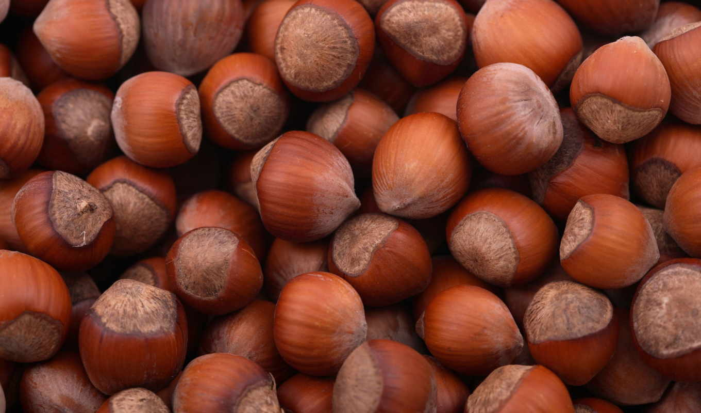 орехи, лесные, добавлено, фундук, изображения, категория,