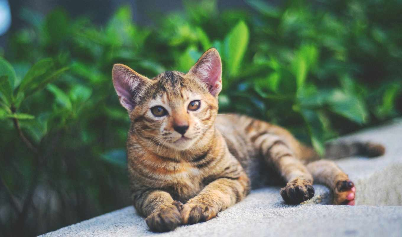 flickr, norsez, views, photos, mind, hive, fujifilm, users, videos, взгляд, кот, piace,