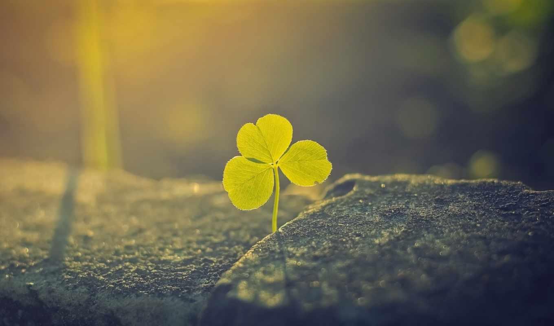 clover, гармоничных, сборка, спокойных, качестве, мотивах, заставки,