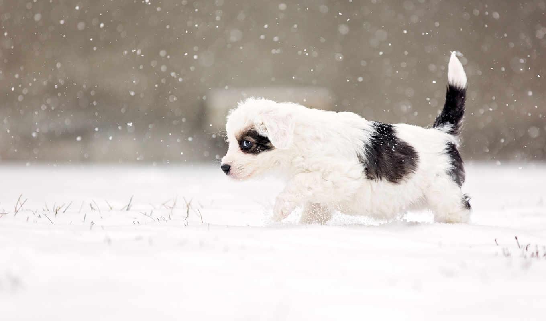 собака, alert, собаки, коллекция, снег, animals, zhivotnye,
