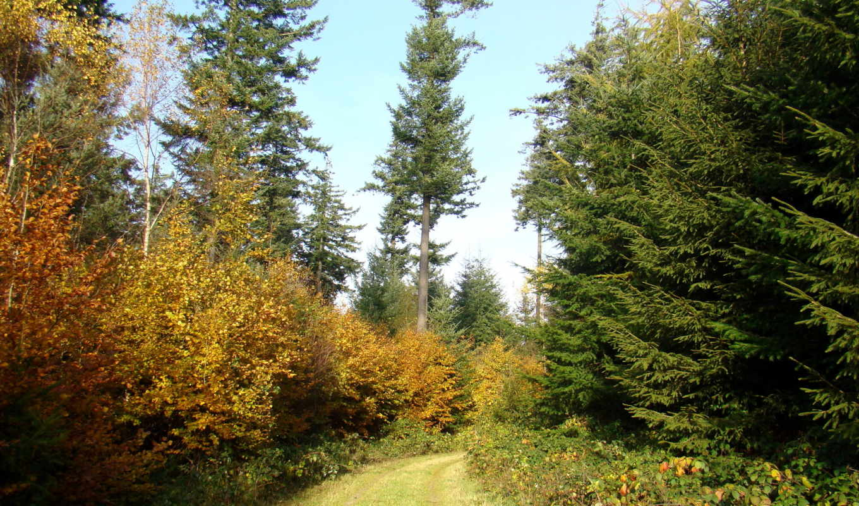пейзажи -, природы, природа, landscape, лес, дорога, красивые,