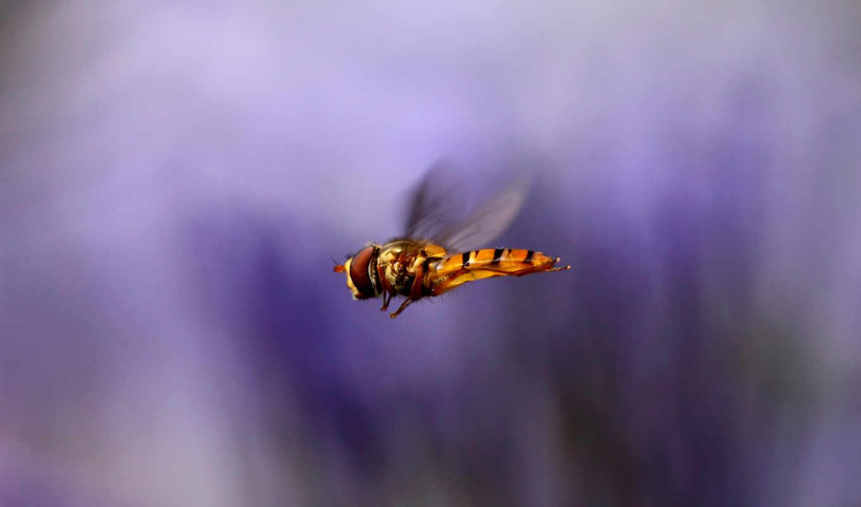 крылья, макро, полет, насекомое, размытость, сиреневый, картинка,