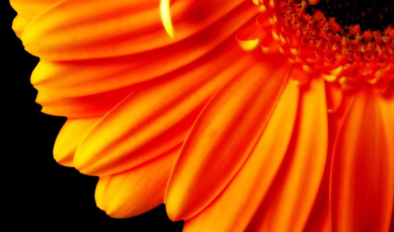 оранжевый, цветы, лепестки, деревья,