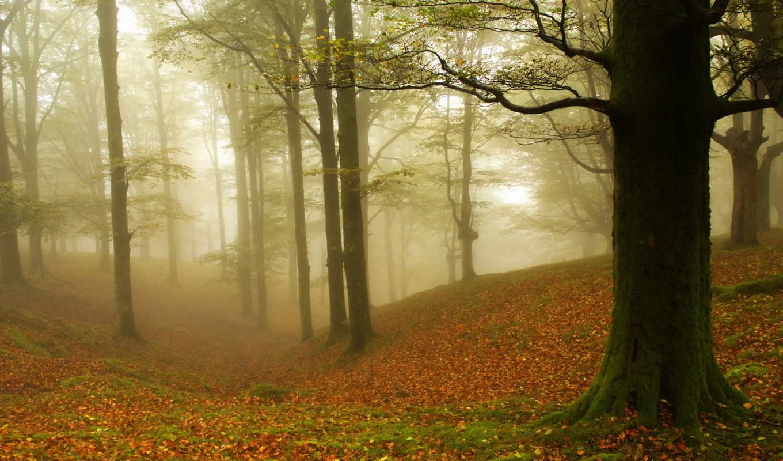 осень, деревя, туман, лес,
