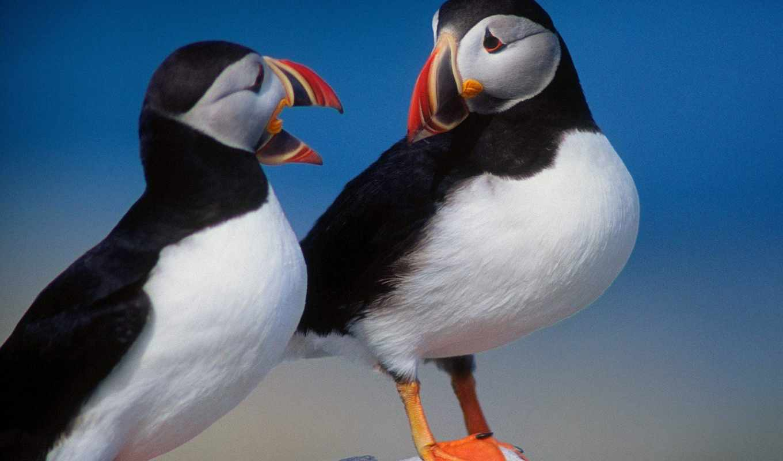 pico, color, ave, aves, con, naranja, су, por,