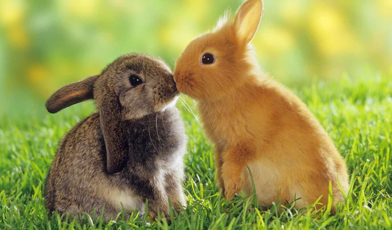кролики, животных, olx, домашних, кролик, sale, природа, купить, тульчин, zhivotnye,