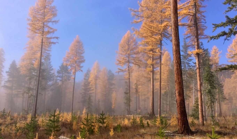 лес, prehistoric, дерево, colombia, british, экосистема