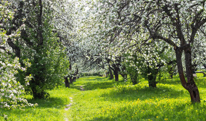 цветущий, сад, весна,