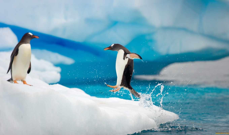 penguins, funny, cute, picture, animals, download, desktop, penguin,