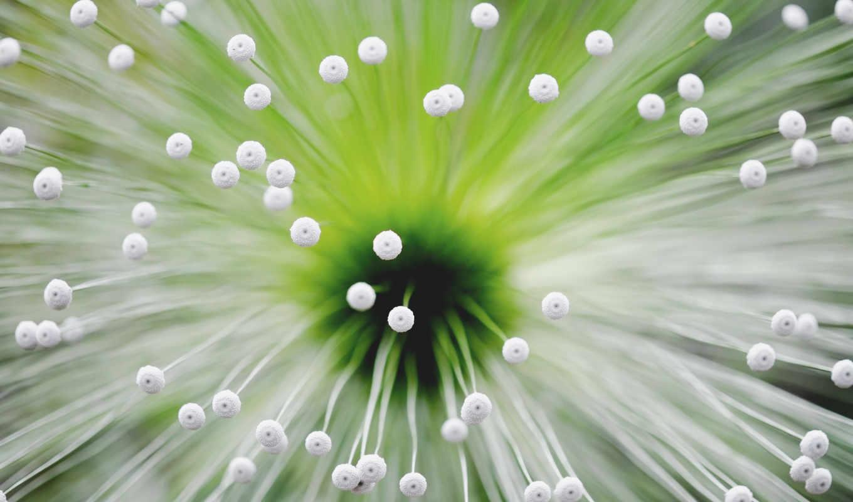 makro, цветок, cvety, нояб,