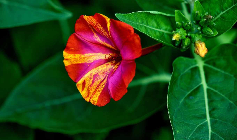 flores, fondos, bosques, fotografías, this, bosque, del, sunflowers, available,