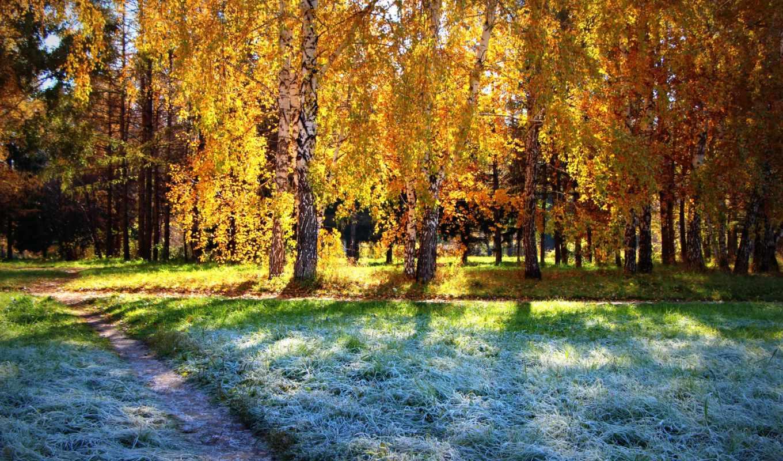 осень, лес, солнце, березы, фото, иней,