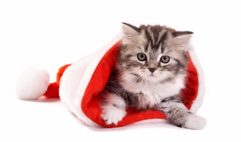кошки, год, новый, животные, шапки, праздники, кошка, рождество,