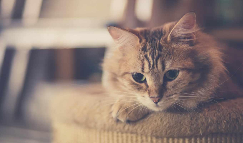 красивые, loading, кошки, kpbimhaiii, zhivotnye, ,