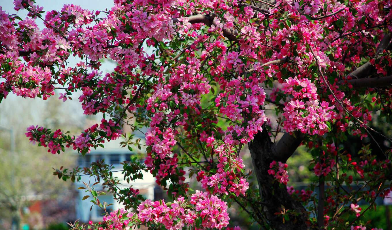 природа, февр, разрешений, весенние, весна, подборка, summer, красивые, часть, высоком,