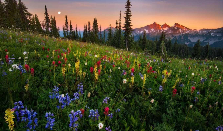 природа, закат, количество, лес, поле, цветы,
