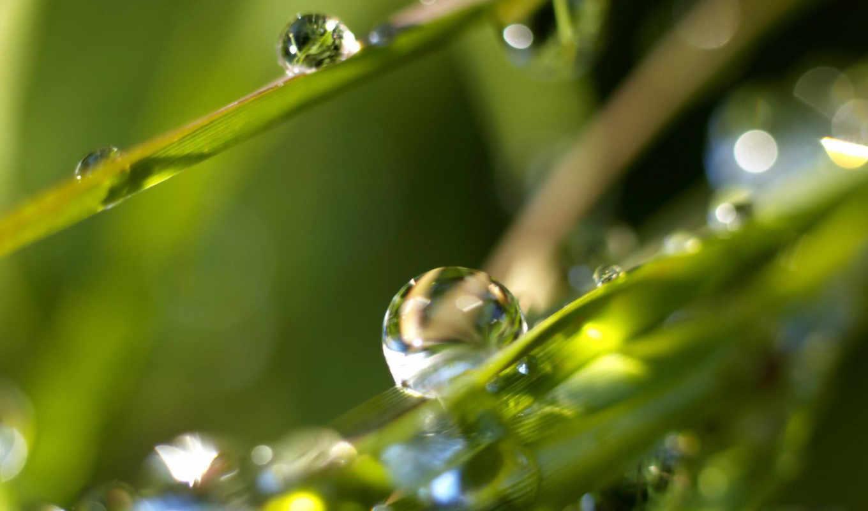 трава, капли, макро, роса, утро, wallpaper, вода, картинка, смотрите, picture, любовь, nature, hd, разное,