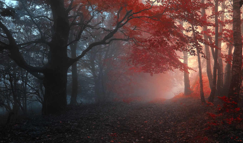 туман, осень, лес, дорога, деревья, природа,