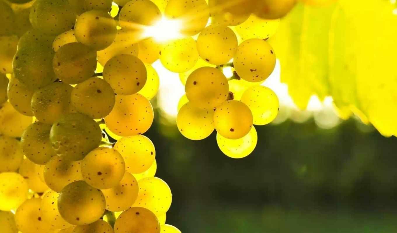 виноград, винограда, армении, объекты, artvlad, srl,