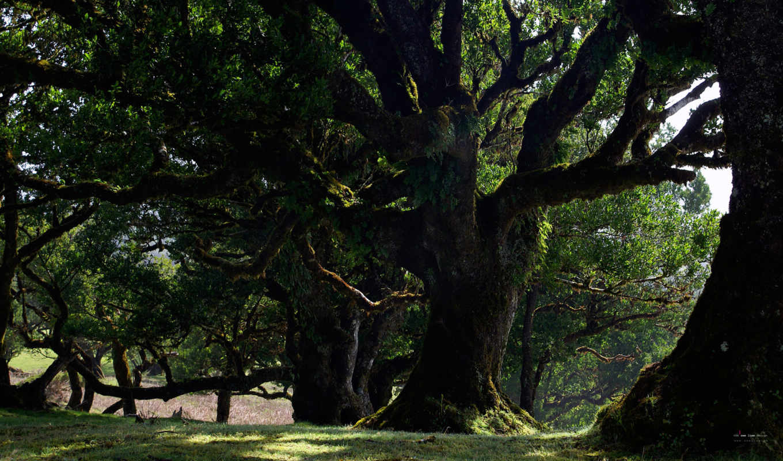 деревья, лес, природа, обоев, wallpapers, красивые, wallpaper, рисунки, картинка, очень, путешествуя, миром, hd, nature, природы,
