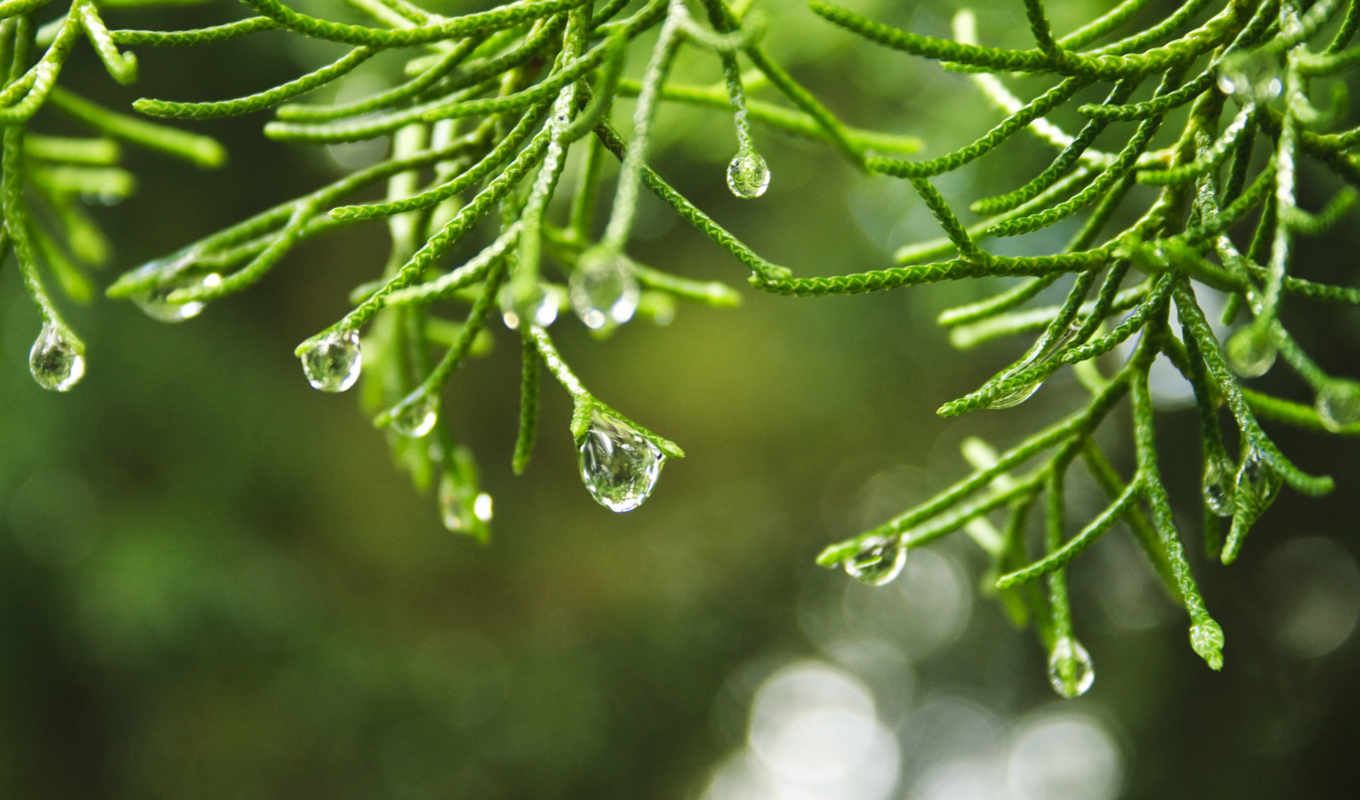 you, summer, style, met, nature, trees, landscapes, field, code, macro, depth, dew, raindrops,