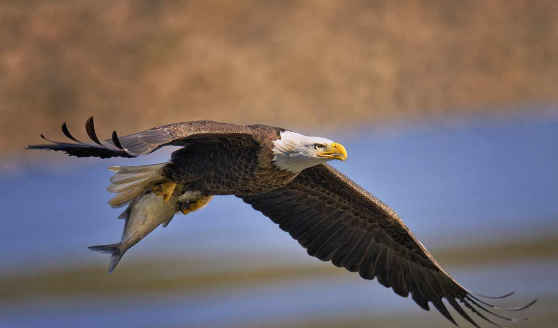 птицы, животные, полет,
