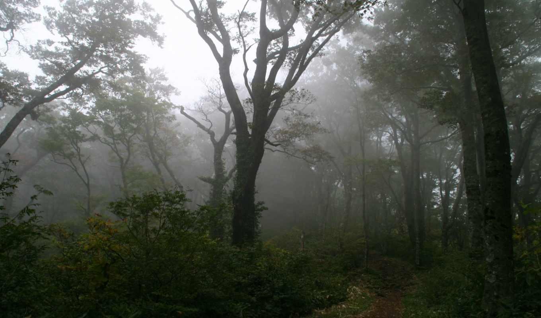 туман, лес, дерево, тропинка, деревья, картинка,