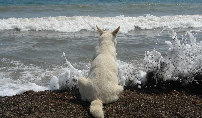 волны, море, surf, пенка, брызги, color, white, высоком,