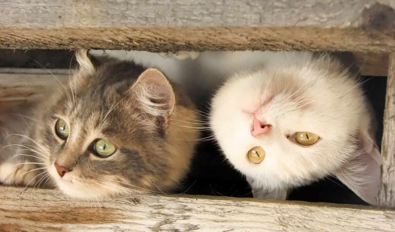 кошки, kitty, кот, котенок, cats, картинка, funny,