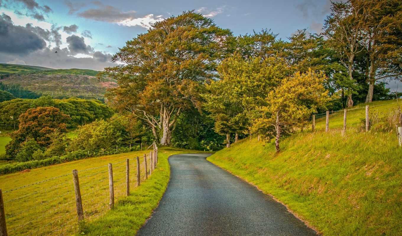 дерево, dorogoi, трава, osen, oblako, небо, дорога, дерево, polot, поле, трава