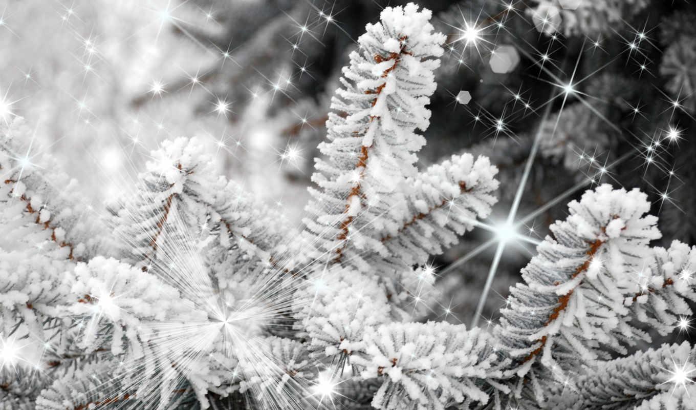 дерево, снегу, winter,