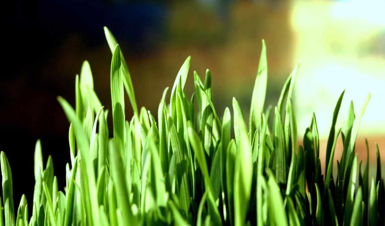 трава, можно, эти, свой, макро, совершенно, wpapers,